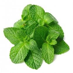 Mint Leaf (പൊതീന)