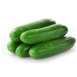 Kiyar (Cucumber)